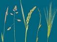 grassen herkennen
